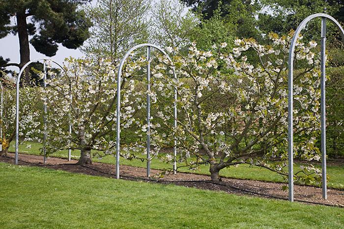 protection arbre fruitier